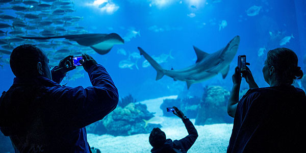 il_attractions_oceanario